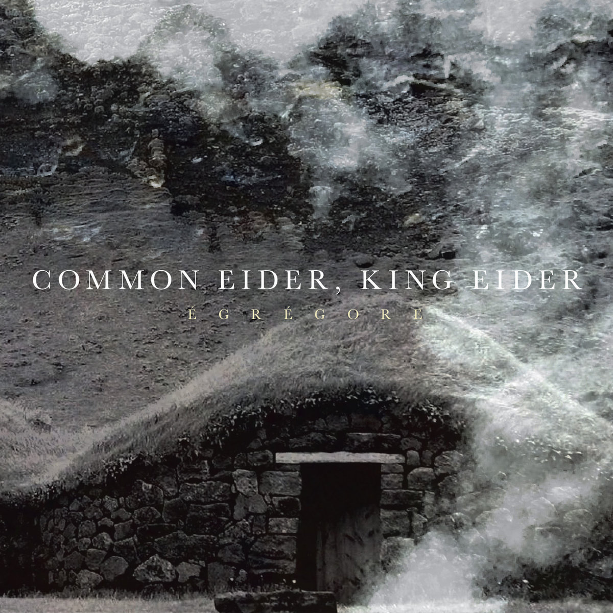 Common Eider, King Eider_cover